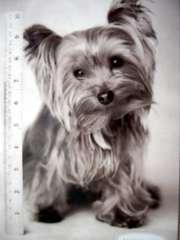 Пропала собака по кличке Тимми