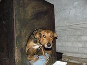 Собака надеется найти доброго хозяина