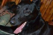 Собака мечтает о доме и хозяине