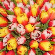 Тюльпаны к 8 марта!!!