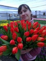 Цветы тюльпаны на 8 марта,  20 сортов